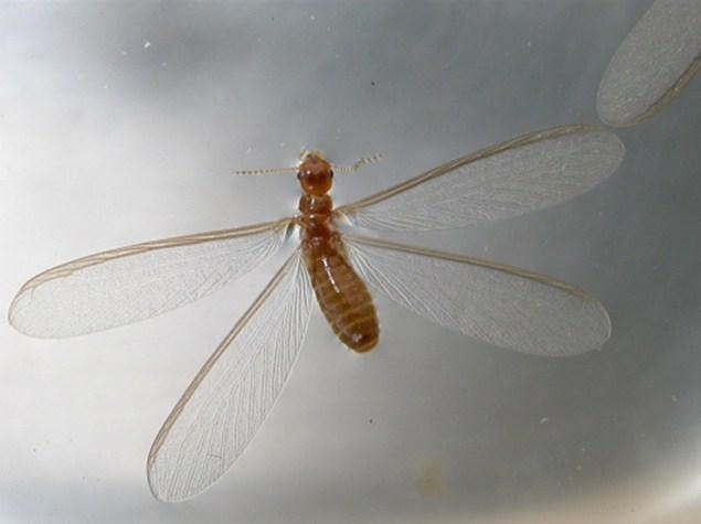 উই পোকার বুদ্ধিমত্তা – Intelligence of Termite ...